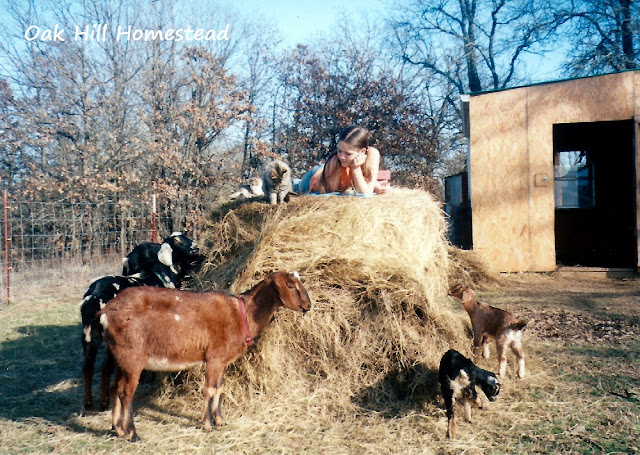 A sunny day in the goat pen