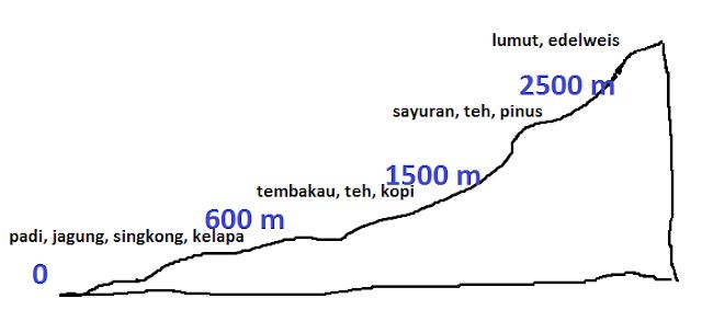 Iklim Junghuhn dan Vegetasinya