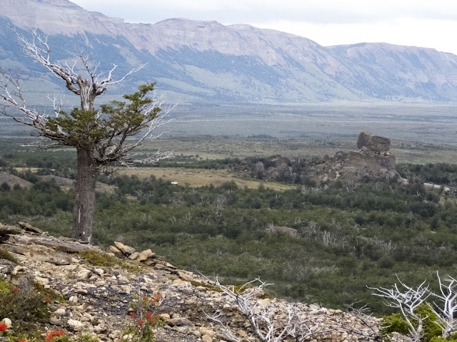 Tree and mountain view above the Mylodon Cave near Puerto Natales Chile