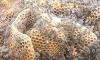 Βρέθηκε ο κάτοχος του παρατημένου μελισσιού Δείτε τι έφτιαξε μέσα, τόσο καιρό χωρίς επιθεώρηση