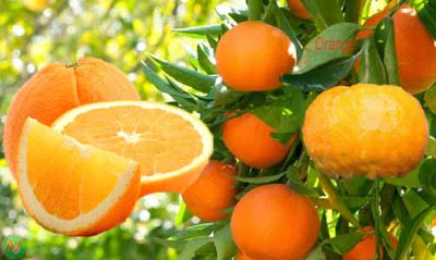 orange; orange fruit
