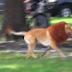 Έχω σκύλο λέει..ναι αλλά εγώ έχω ..λιονταρόσκυλο!! Και όλοι κλαιν μαιν με απίστευτο γέλιο!