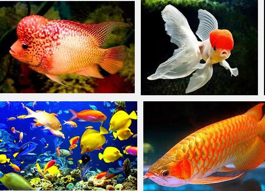 Unduh 55+ Gambar Ikan Paling Cantik HD Terbaik