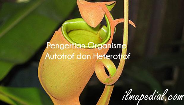 Pengertian Organisme Autotrof dan Heterotrof
