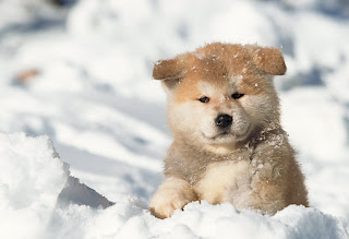 15 Dog Breeds That Love The Snow