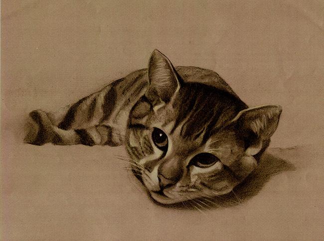 Retrato de gato atigrado tumbado