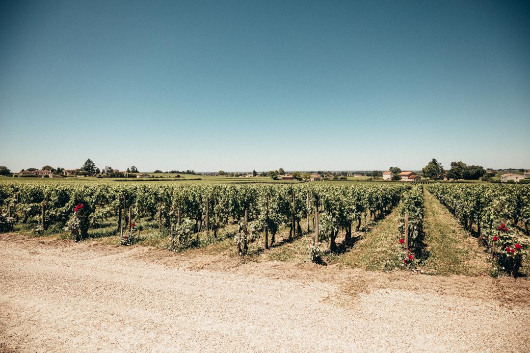 bordeaux wine yard winery
