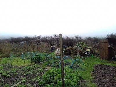 St Ives Cornwall Allotment - January
