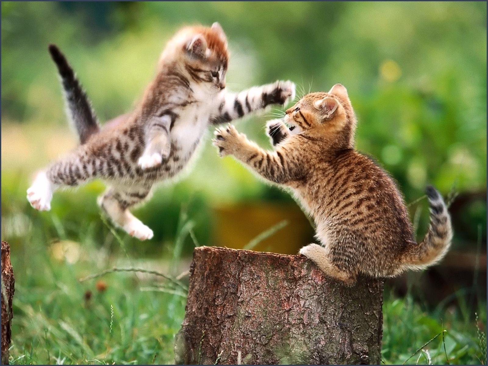 https://4.bp.blogspot.com/-HHGgyi01vlI/Tn6juVxafkI/AAAAAAAACWs/IogIWAdhVrQ/s1600/994-animals_cat_cats_wallpaper.jpg