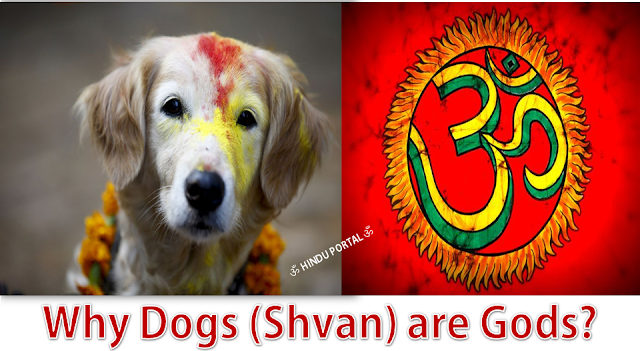 Why Dogs (Shvan) are Gods? A Major Belief In Hinduism