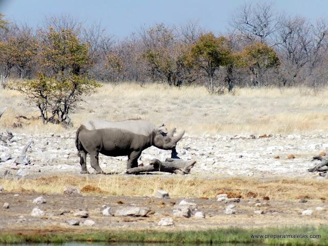 rinoceronte namibia