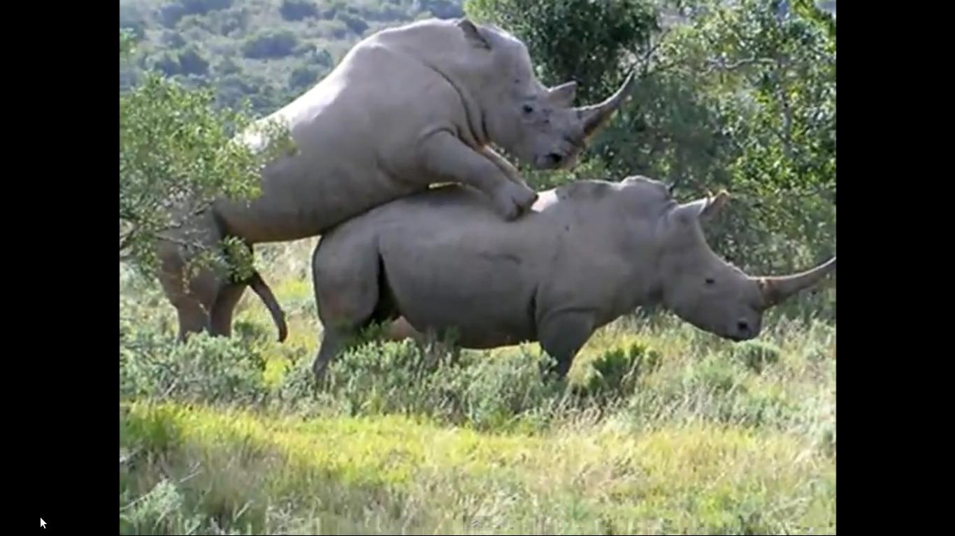 rhino penis size jpg 1200x900