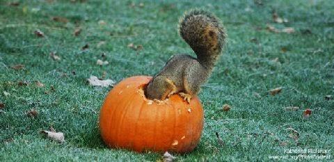 http://4.bp.blogspot.com/-HII1DvTMEPo/VFUAWjJs6lI/AAAAAAAA5DY/16GXwjedak0/s1600/pumpkin_squirrel_grass-620x302MA29505539-0003.jpg