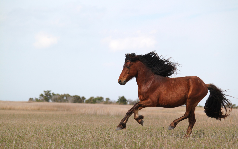 running horses | hd wallpapers · 4k