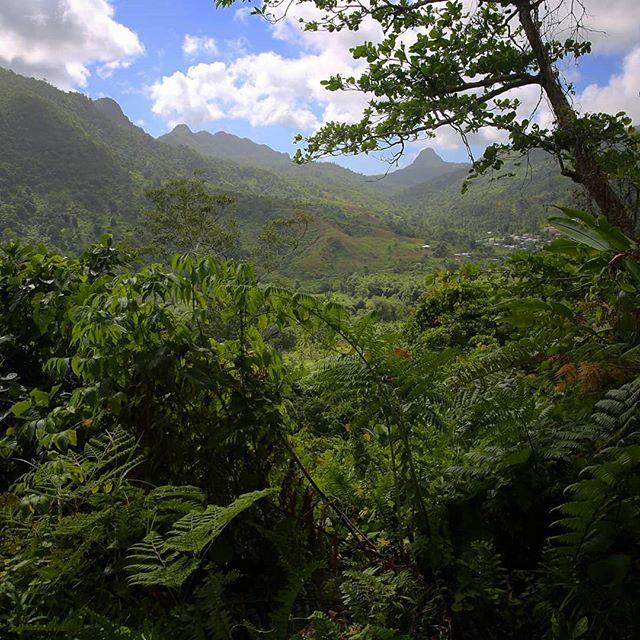 Selva de Lovoni, Ovalau