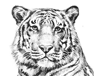 тигр раскраска Tiger coloring pages