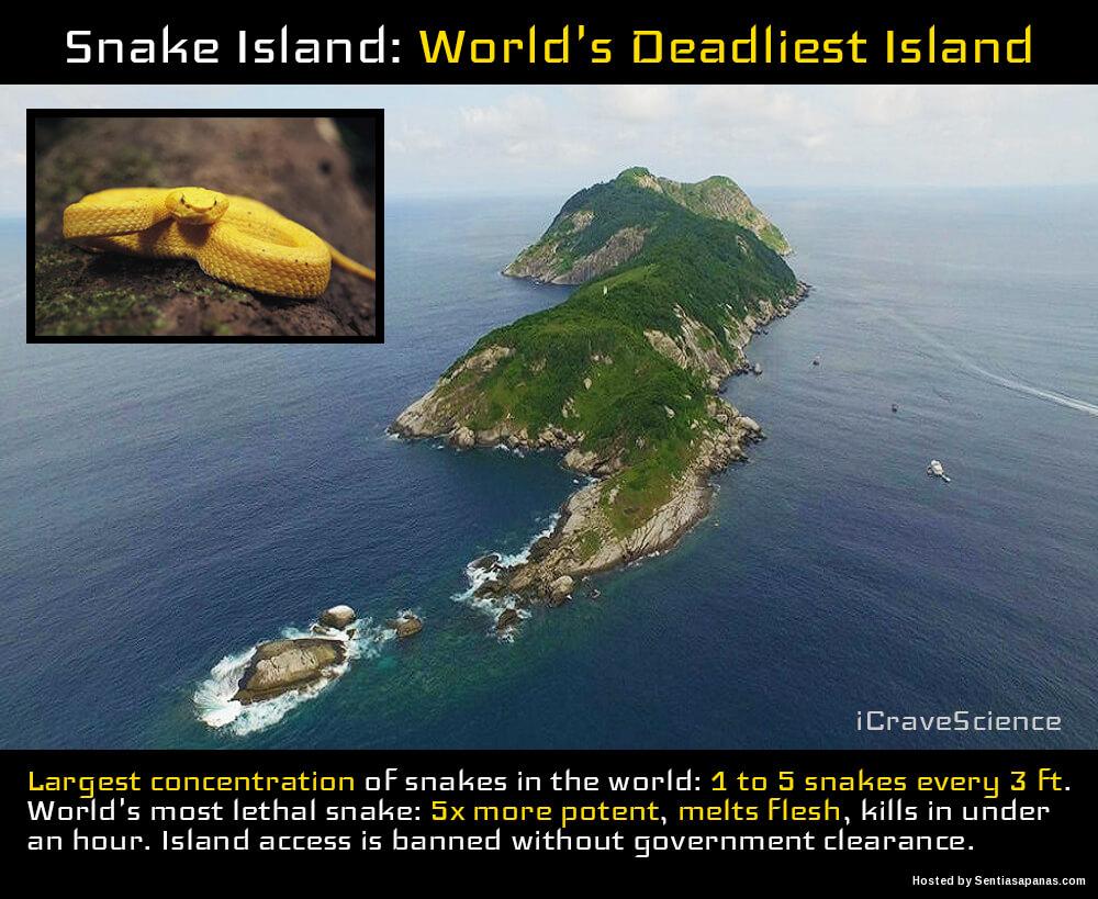 Snake Island, Pulau Yang Menempatkan Ular Paling Berbisa Di Dunia