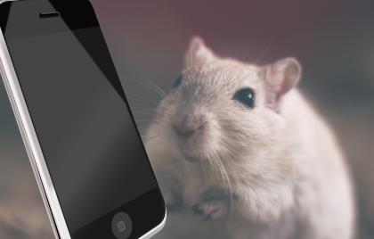 Skurril: Tierversuch mit Smartwanze - Smartphone - von NSA aus ethischen Gründen abgebrochen