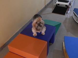 ginastica para cães