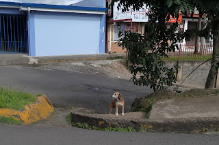 dogs of puriscal