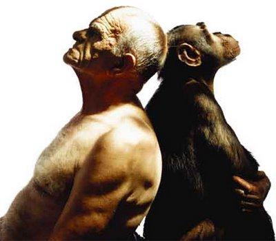 Semelhança Entre o Homem e o Chimpanzé