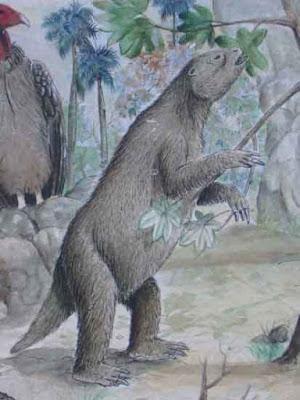 Megalocnus