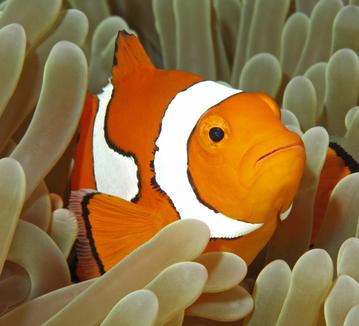 nemo - kayıp balık