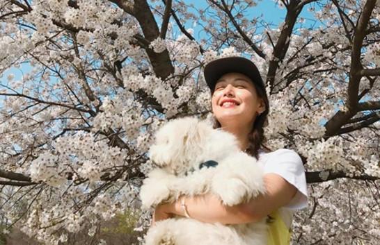 Sao Hàn 17/4: Sulli quyến rũ khác lạ, Park Bo Gum cười không màng hình tượng