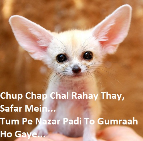 Funny Status In Hindi Read New Collection Of Best Funny Quotes