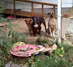 9/13/11  Project Paws Animal Rescue is a Very Small, All Volunteer, Rescue with 3 Foster