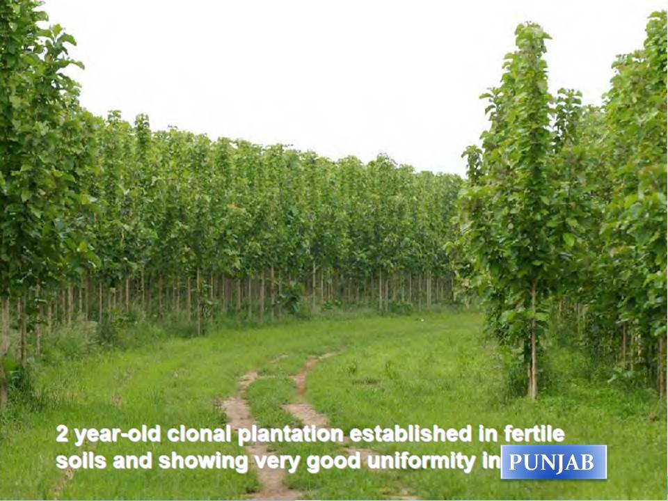 Teak plantation earn lot of money for your old age from your land in village: Earn money for old ...