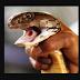 Homem é picado por cobra venenosa, e morde esposa para ela morrer junto
