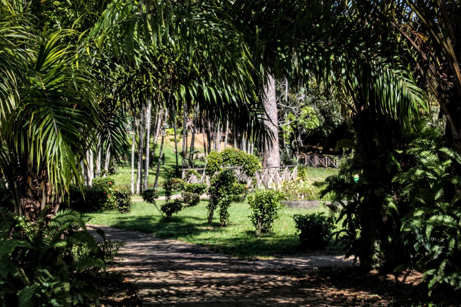 Mes albums photos by fred jardin botanique de cayenne for Rabais jardin botanique 2016