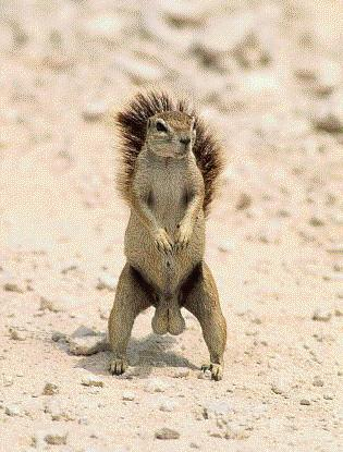 Squirrel Nuts LOL
