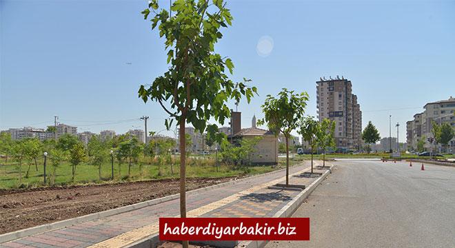 Diyarbakır Büyükşehir Belediyesi Musa Anter Bulvarına 285 ağaç dikiyor