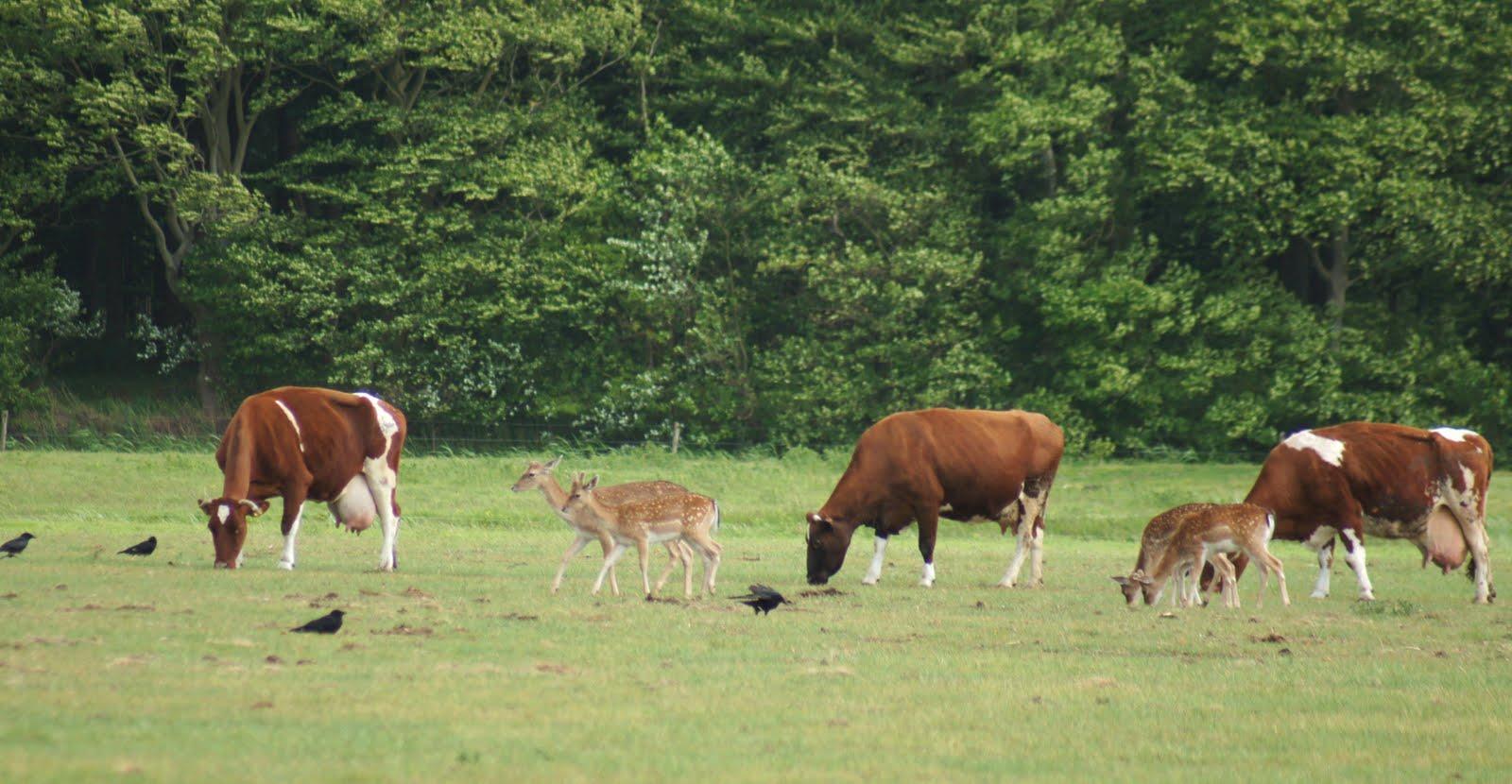 Single herten