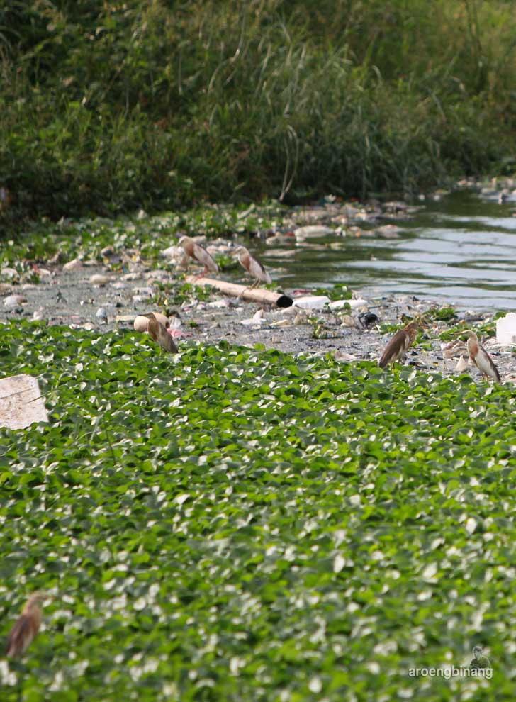 burung bangau taman kota ria rio jakarta