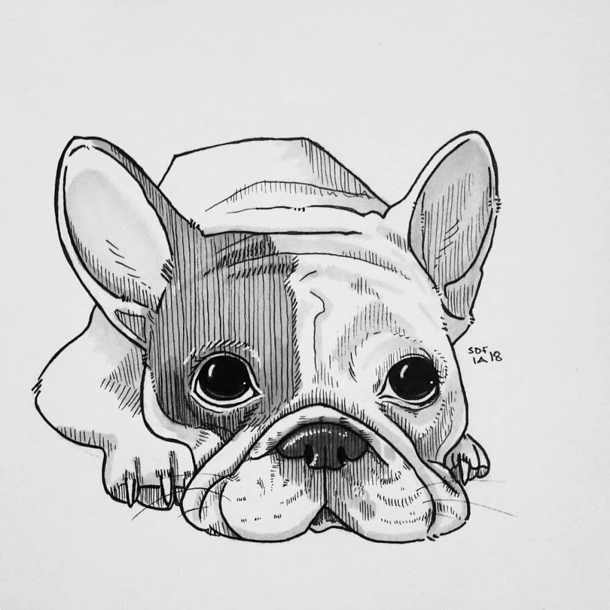 04-French-Bulldog-Sofia-Härö-Black-and-White-Ink-Animal-Drawings-www-designstack-co