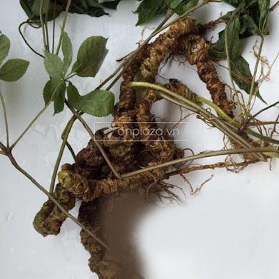 hình ảnh sâm ngọc linh tự nhiên vùng núi Quảng Nam
