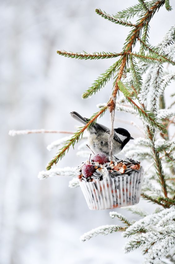 Beautiful winter scene with winter bird in snow in tree