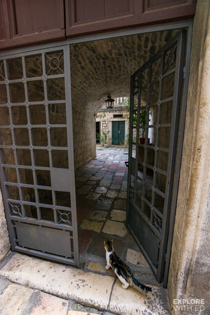 The old doors of Kotor with freely roaming stray cats