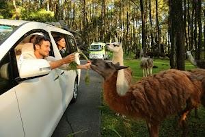 Lokasi Fasilitas Dan Harga Tiket Masuk Wisata Taman Safari Prigen