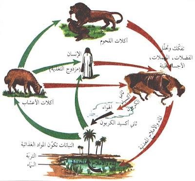 الوسط البيئي