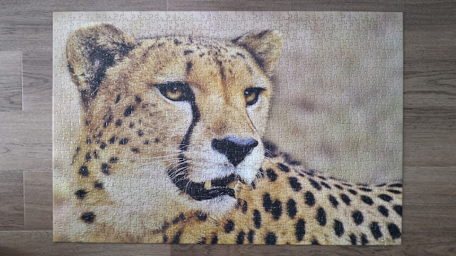 African cheetah 1000 pieces puzzle