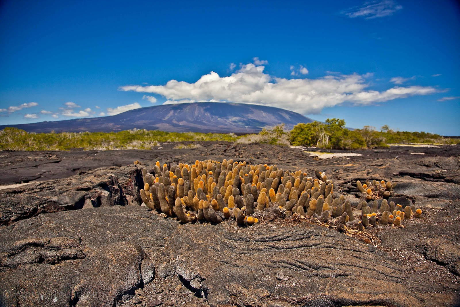 Galapagos Island Geography And Geology
