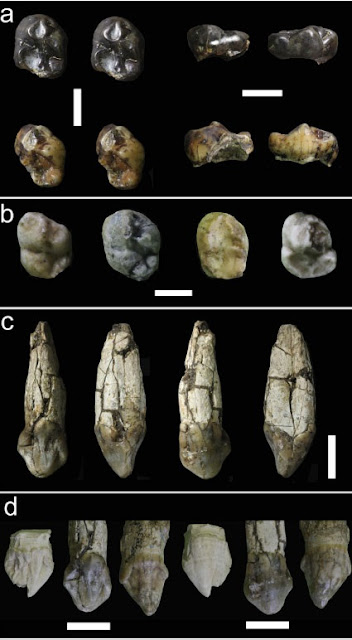 Australopithecus fossils found east of the Great Rift Valley