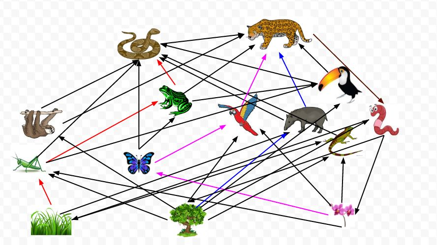 make a food web assignment