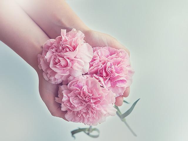 bông hoa cẩm chướng