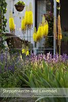 Bepflanzung mediterraner Garten - winterharte Pflanzen für den mediterranen Gartenstil