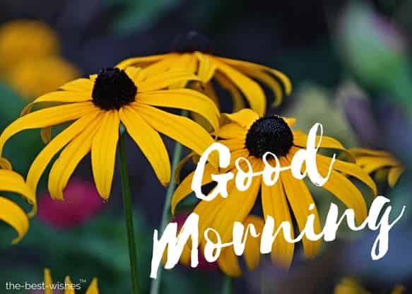 good morning wishes with yellow images